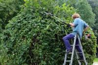 Trouble du voisinage: L'obligation d'élaguer les arbres et les haies
